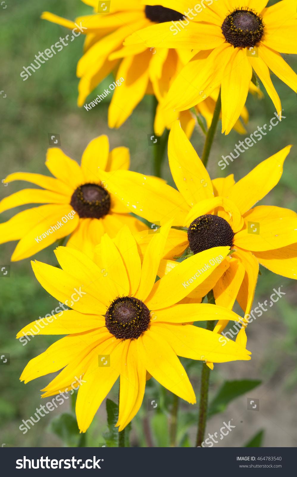 Beautiful yellow flowers ez canvas izmirmasajfo