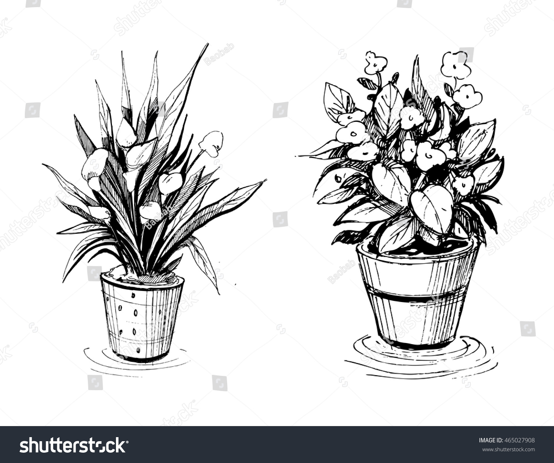 205 & Flowers in pots. Sketch illustration.\u2026 Stock Photo 465027908 ...