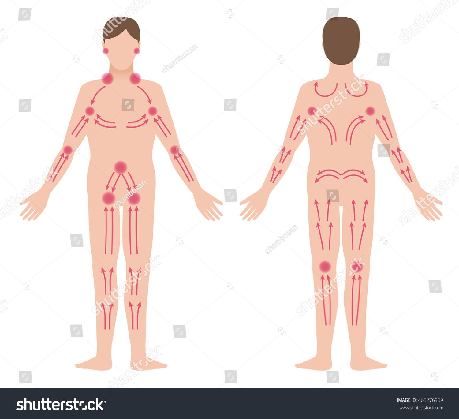 Mans Lymphatic Massage Diagram Front Back Stock Vector 465276959 ...