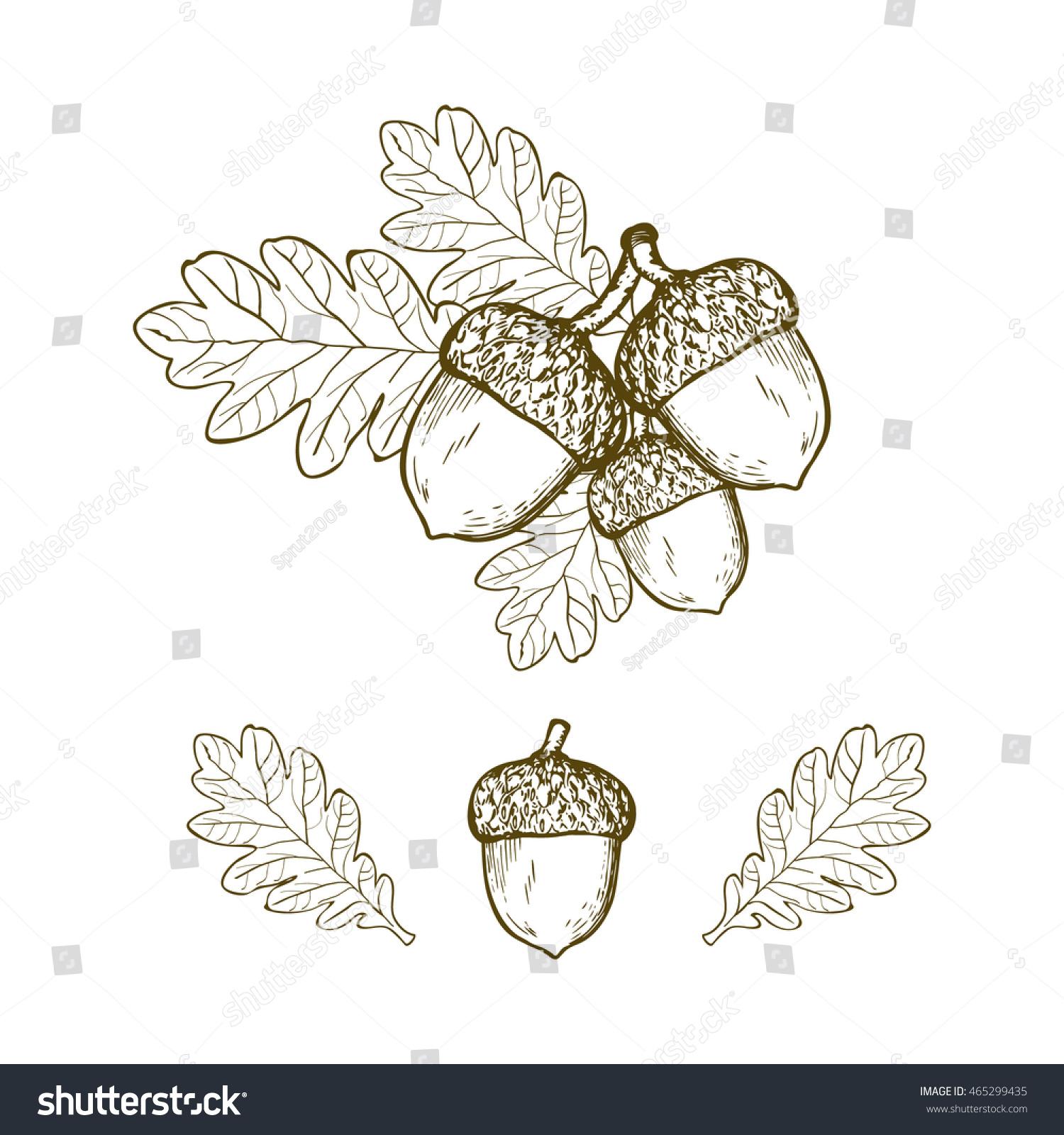 vintage oak leaf acorn stock vector 465299435 shutterstock