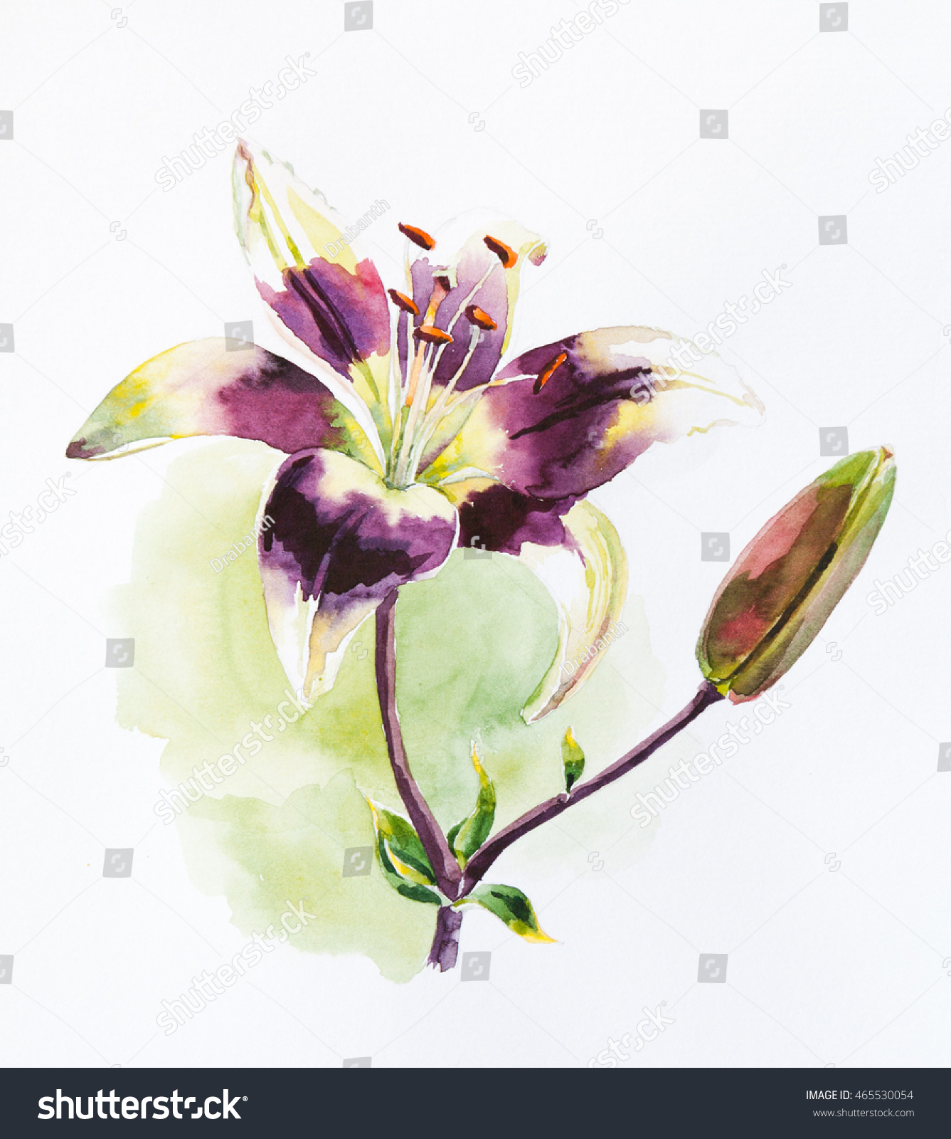 Watercolor painting purple lily flower stock illustration 465530054 watercolor painting of purple lily flower izmirmasajfo