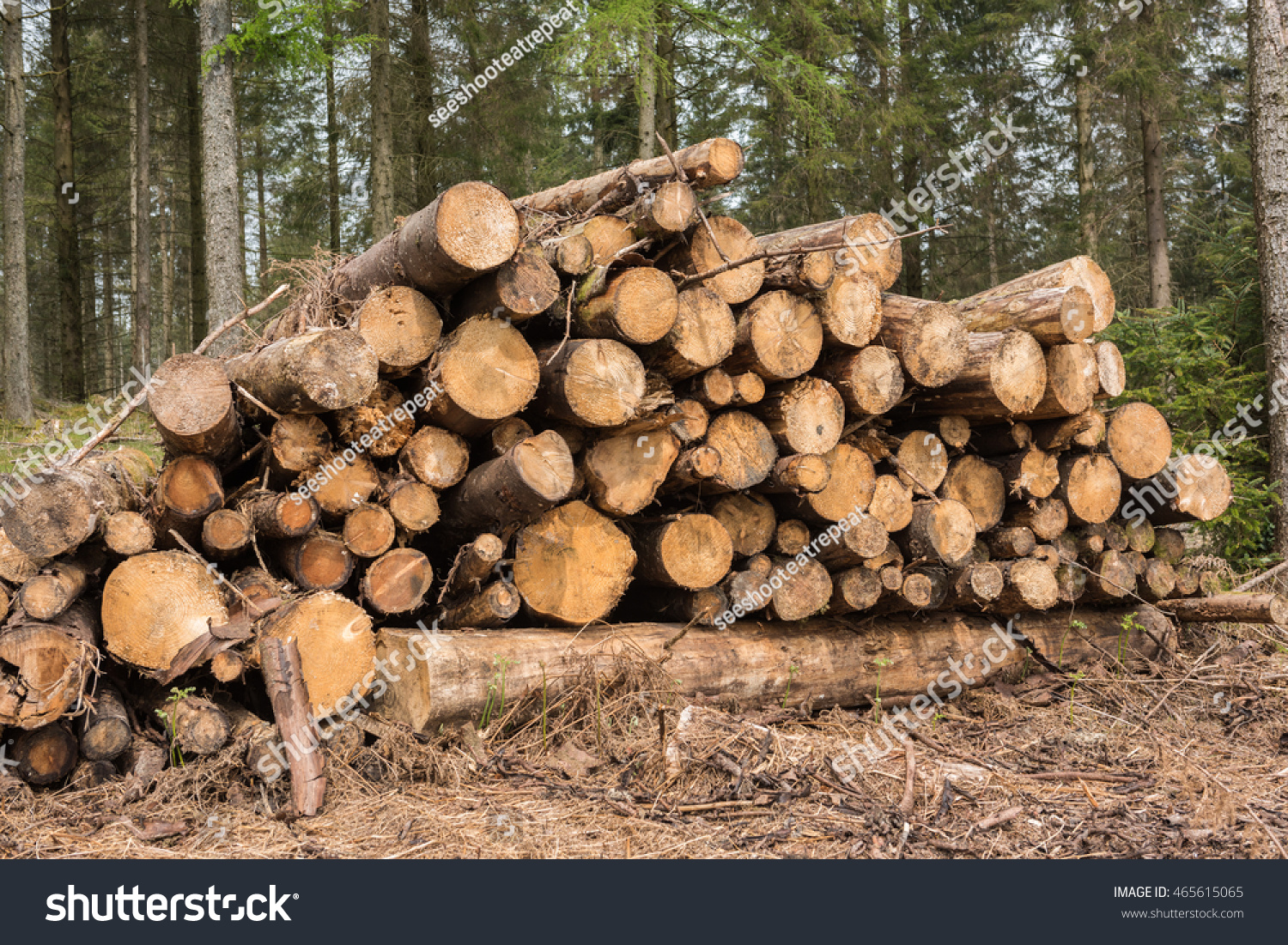 Pile Of Timber : Stock pile timber chopped down trees photo