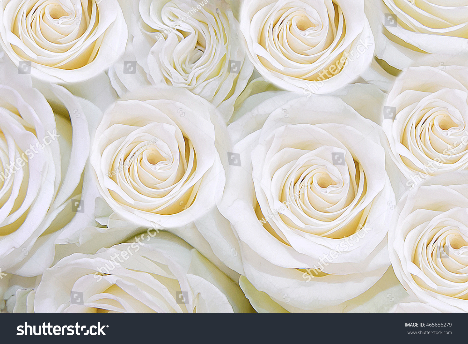 Background white roses texture petals delicate stock illustration background of white roses the texture of the petals of delicate flowers a symbol buycottarizona Choice Image