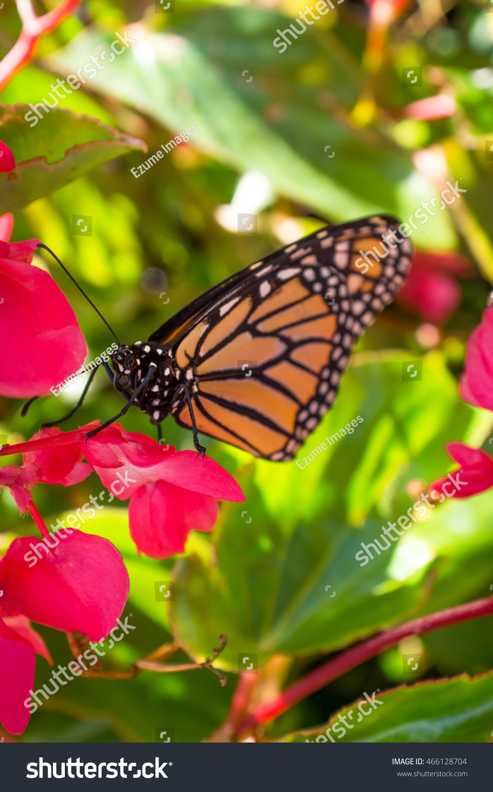 Close Up Monarch Butterfly With Pretty Summer Flowers Ez Canvas