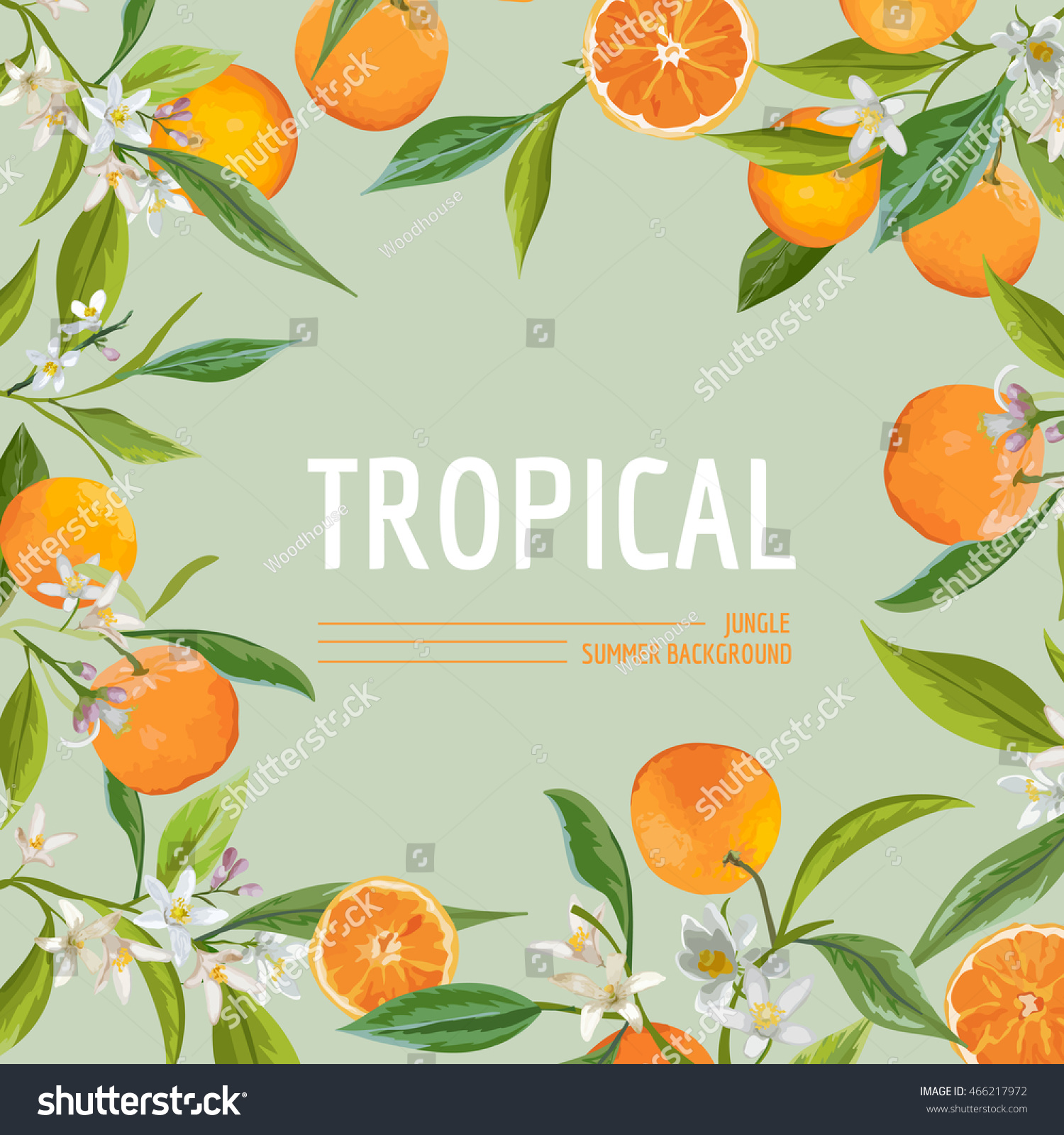 Orange Flowers And Leaves Exotic Graphic Tropical Banner Vector Frame Background