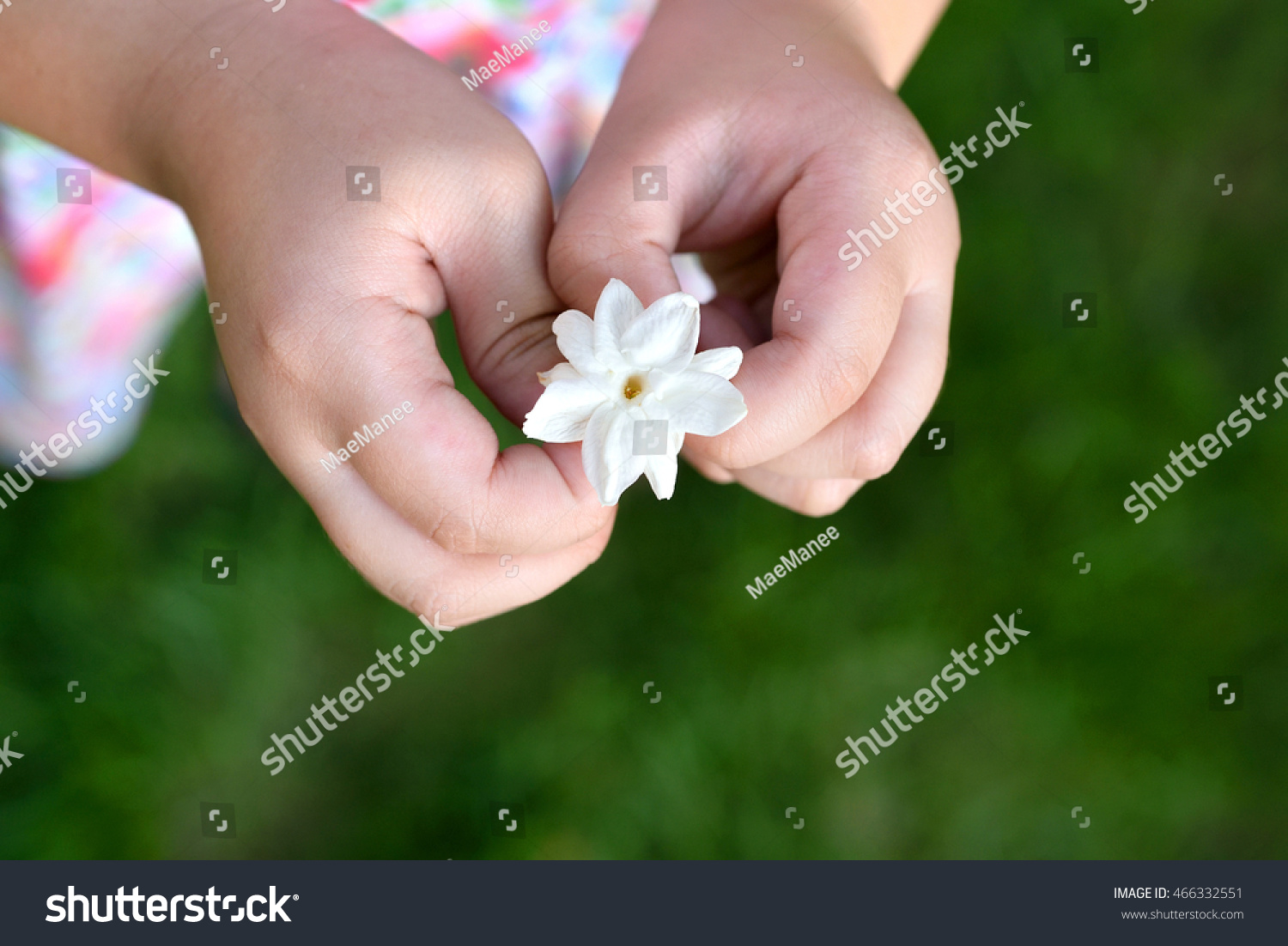 Royalty free asian girl hands holding white jasmine 466332551 asian girl hands holding white jasmine flowers this flower is symbol of thailand mothers day izmirmasajfo