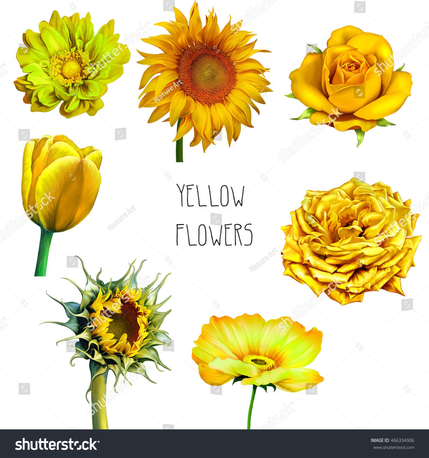 Royalty Free Stock Illustration Of Set Yellow Flowers Rose Dahlia