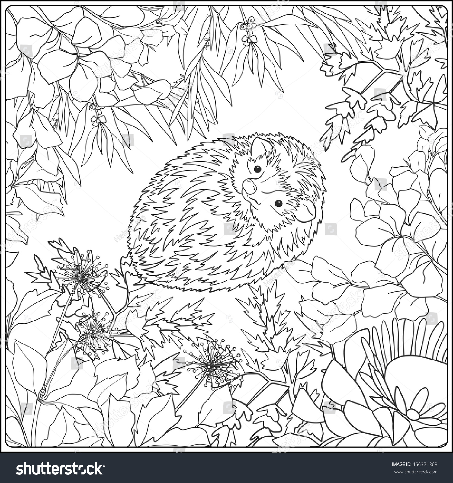 coloring page lovely hedgehog coloring book stock vector 466371368