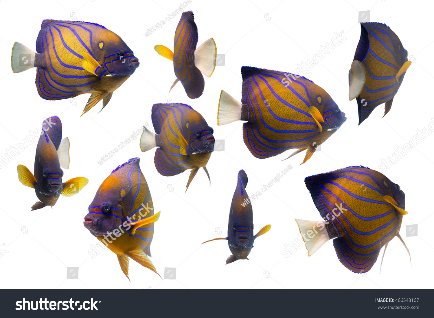 School Of Marlin Fish Isolated On White Background Stock