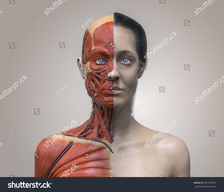 Head Torso Anatomy Woman Human Head Stock Illustration 467324015