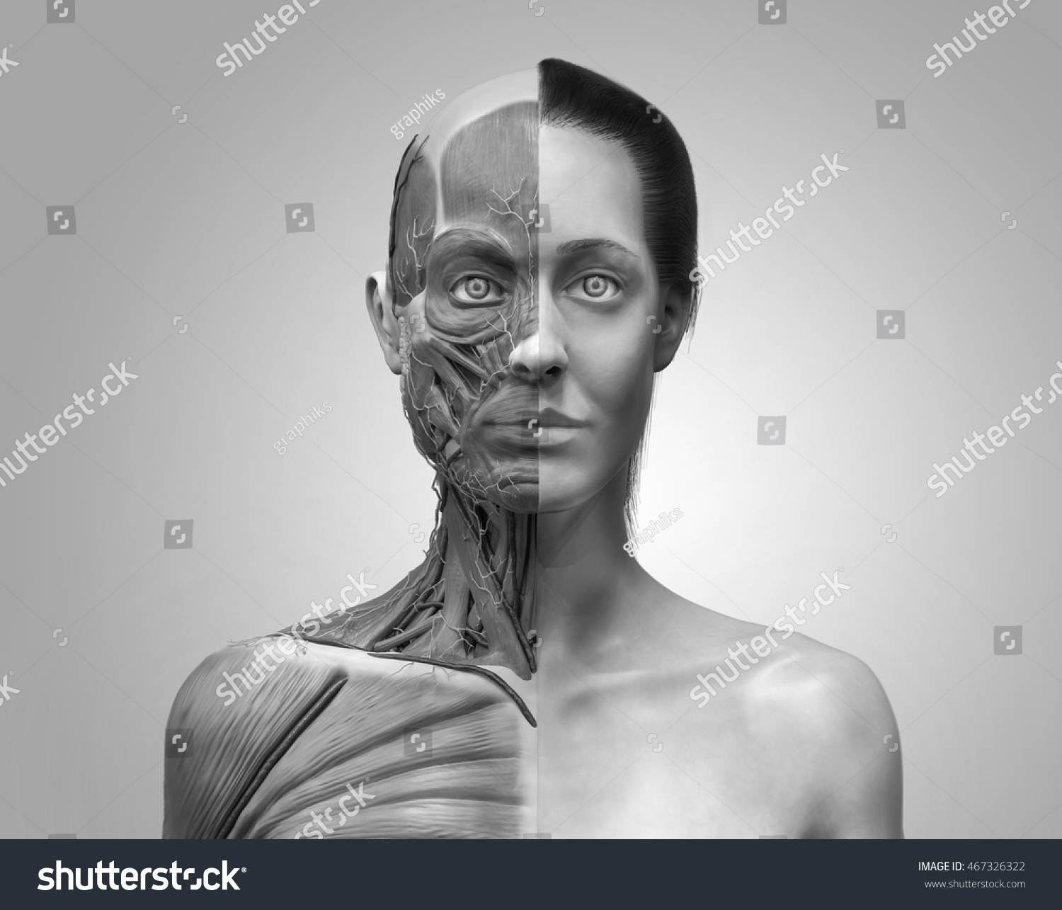 Human Anatomy Female Muscle Anatomy Face Stock Illustration
