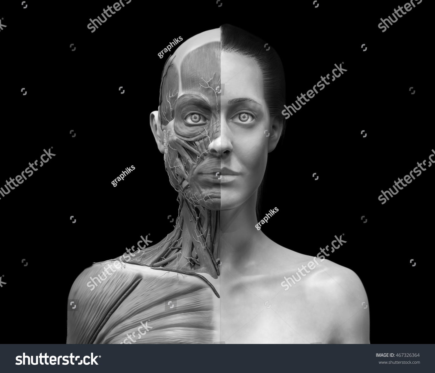 Human Anatomy Muscle Anatomy Face Neck Stock Illustration 467326364 ...