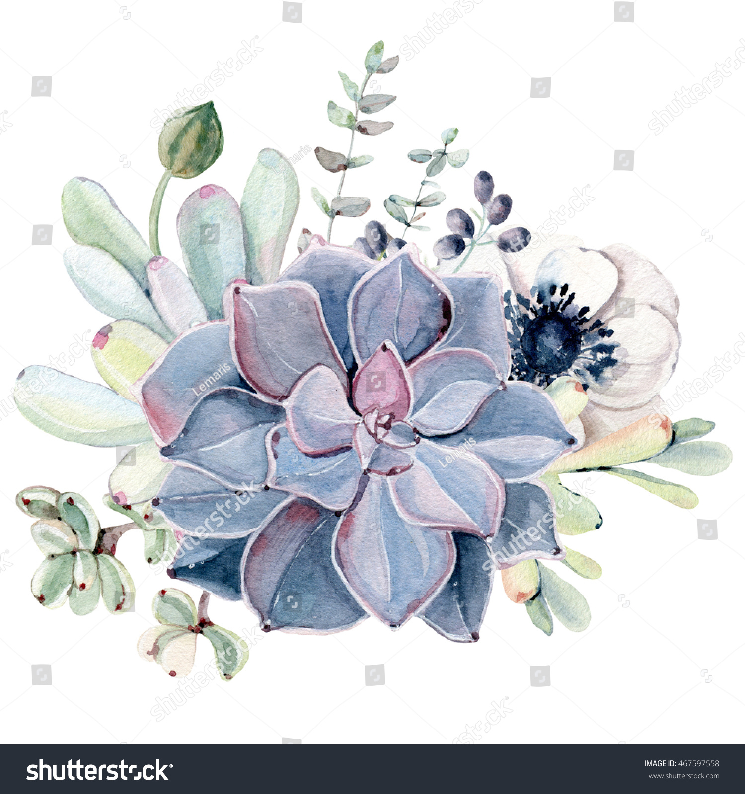 Watercolor Succulent position Isolated Objects Succulents Stock