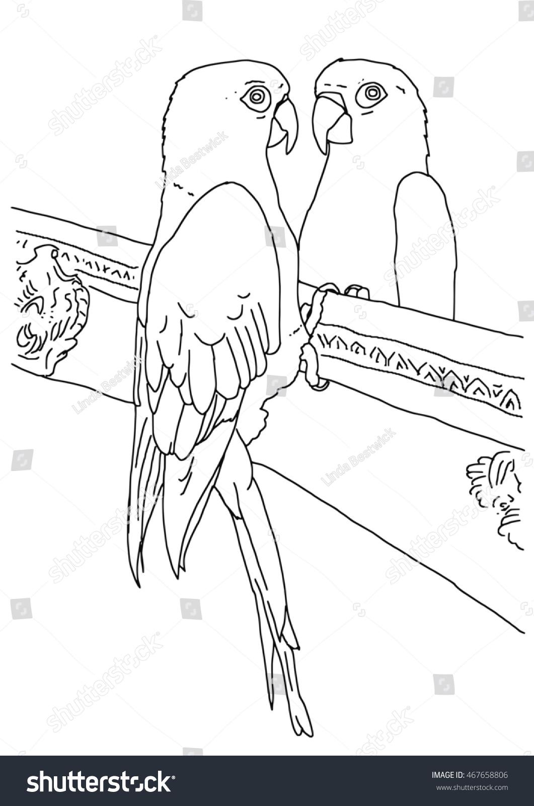 original black white outline drawing parrot stock illustration
