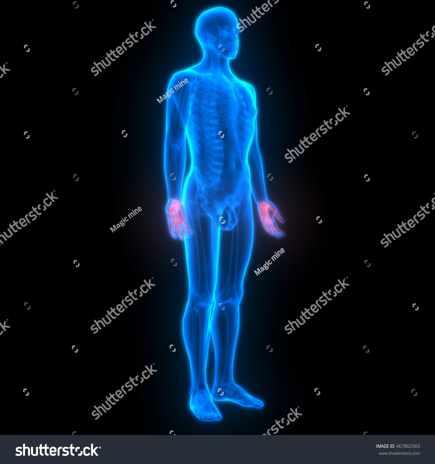 Human Skeleton Finger Joints Anatomy 3 D Stock Illustration ...
