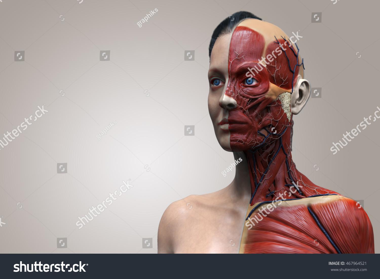 Female Anatomy Head Neck Chest Medical Stock Illustration 467964521 ...