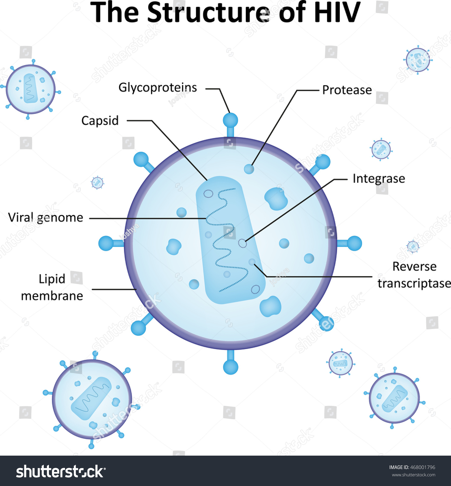 Structure Hiv Labeled Diagram Stock Vector 468001796 ...Hiv Virus Diagram Labeled