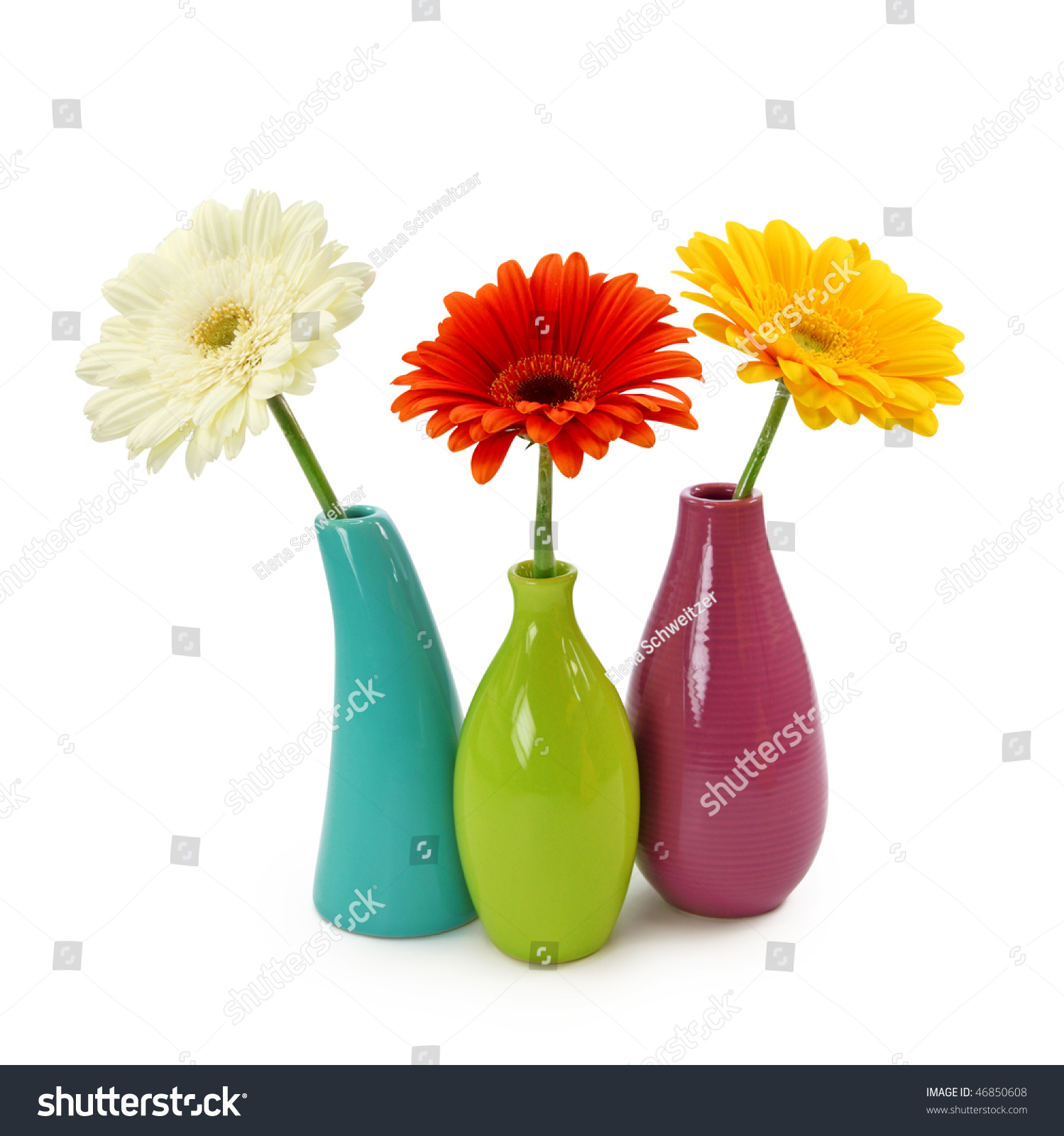 stock image background white photo on vase in royalty vases isolated free flowers