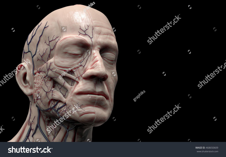 Face Neck Anatomy Isolated Medical Image Stock Illustration