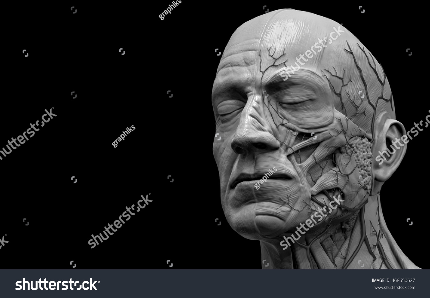 Face and neck anatomy isolated , medical image reference of human ...