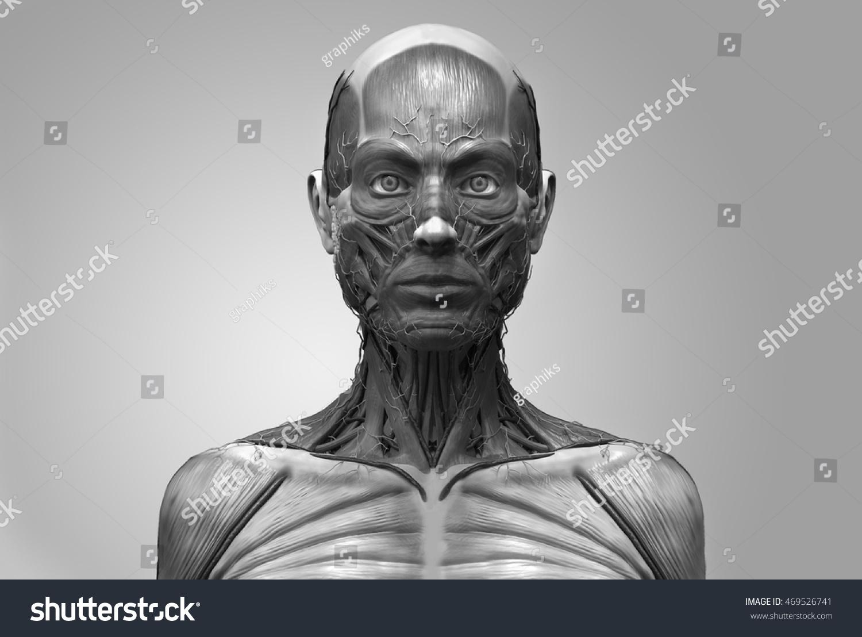 Human Anatomy Female Anatomy Head Neck Stock Illustration 469526741