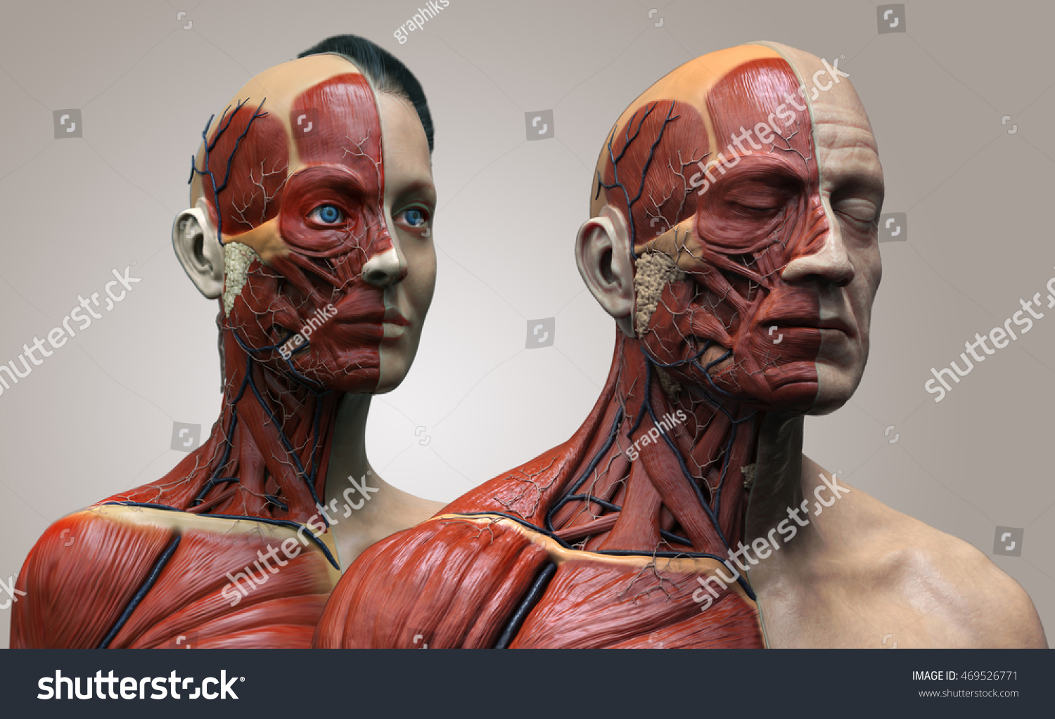 Human Anatomy Background Male Female Muscle Stock Illustration