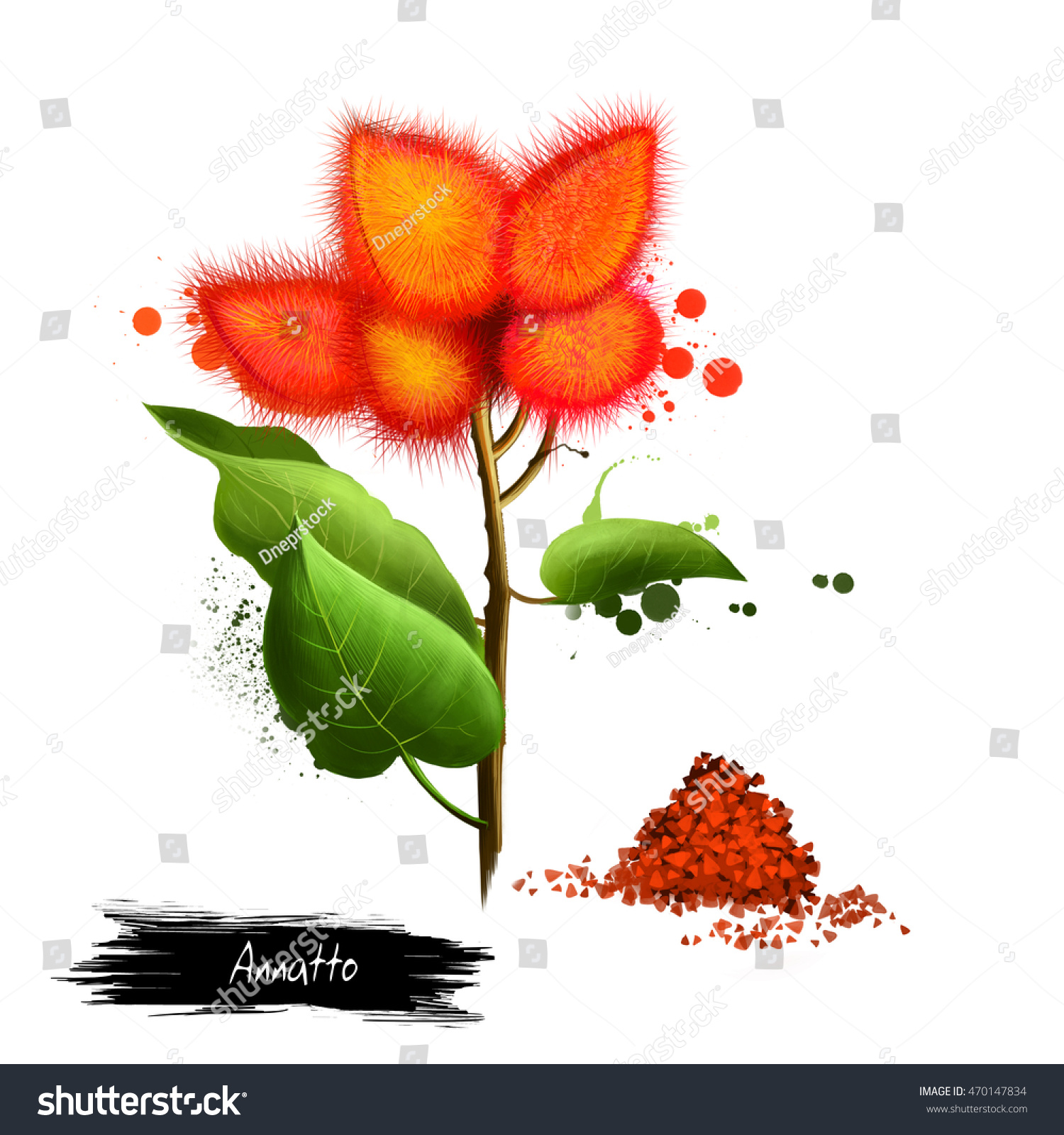 Annatto Lipstick Tree Dried Seeds Orangered Stock Illustration ...