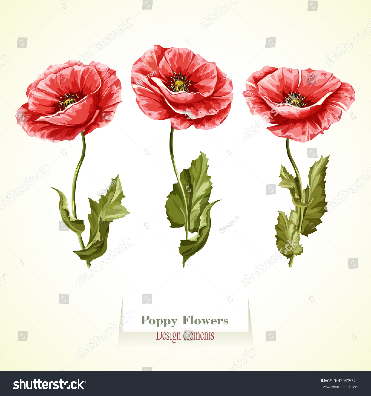 Poppy Flowers Illustration Watercolor Hand Drawn Stock Vector