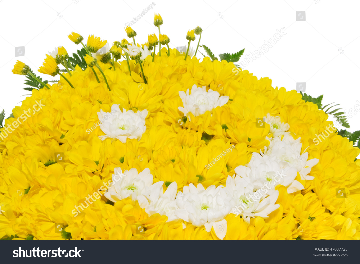 Flower Yellow Smiley Face Stock Photo (Royalty Free) 47087725 ...