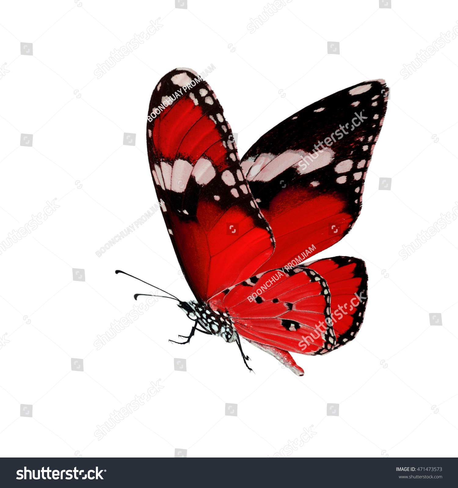 Beautiful Red Butterfly Flying Isolated On Foto de stock (libre de ...