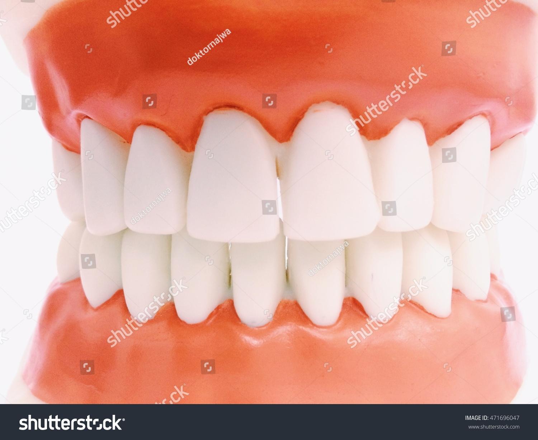 Plastic Human Teeth Models Ez Canvas