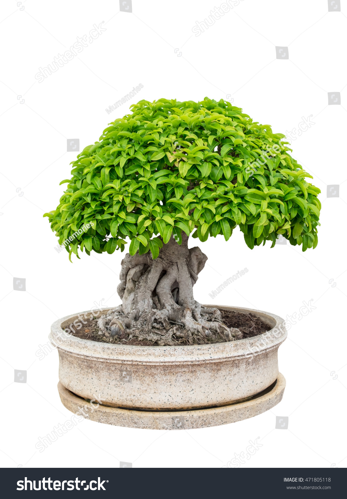 Bonsai tree elegant vase isolated on stock photo 471805118 for Bonsai vasi