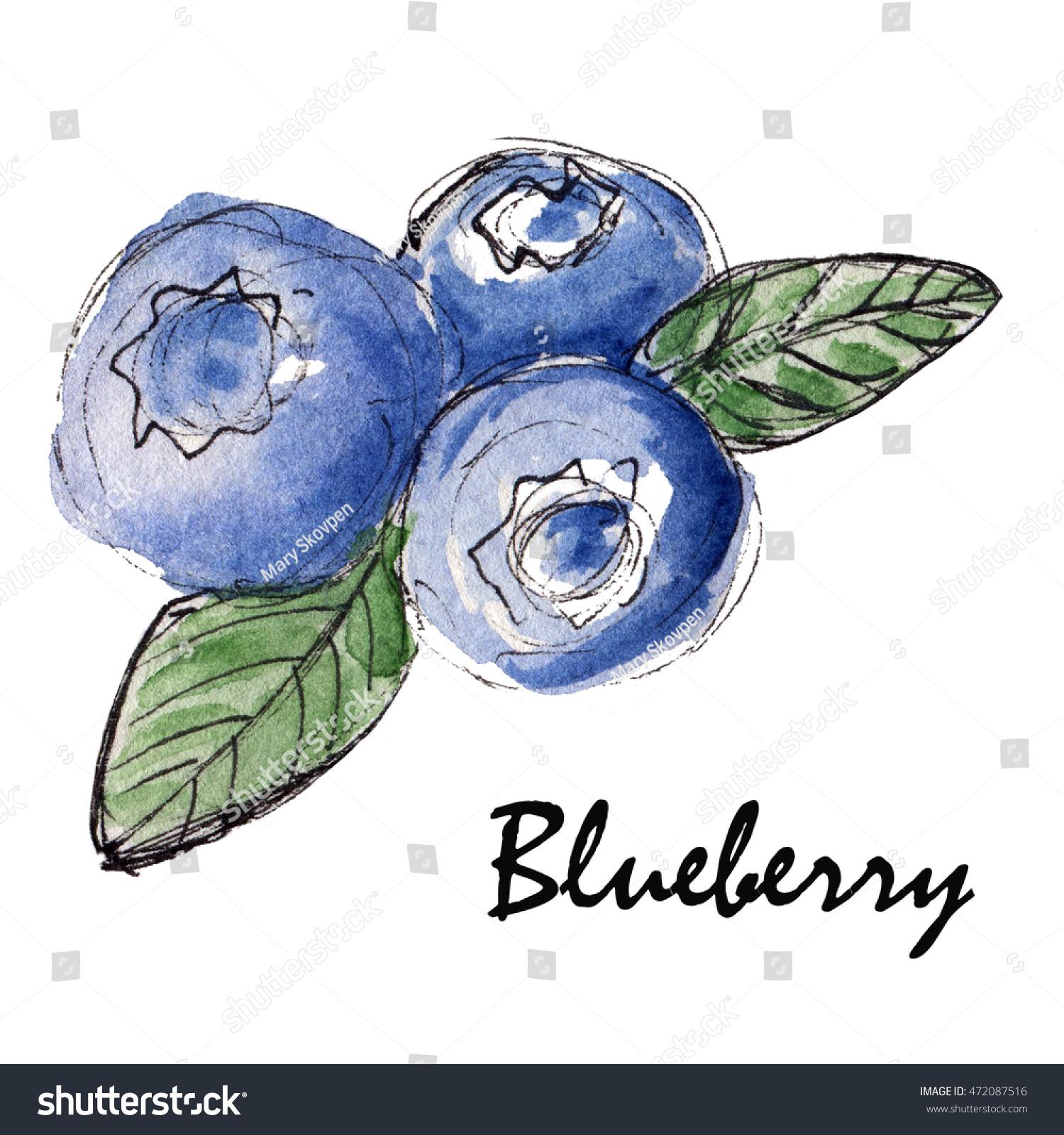 Hand Drawn Blueberry Sketch Stock Illustration 472087516 ...
