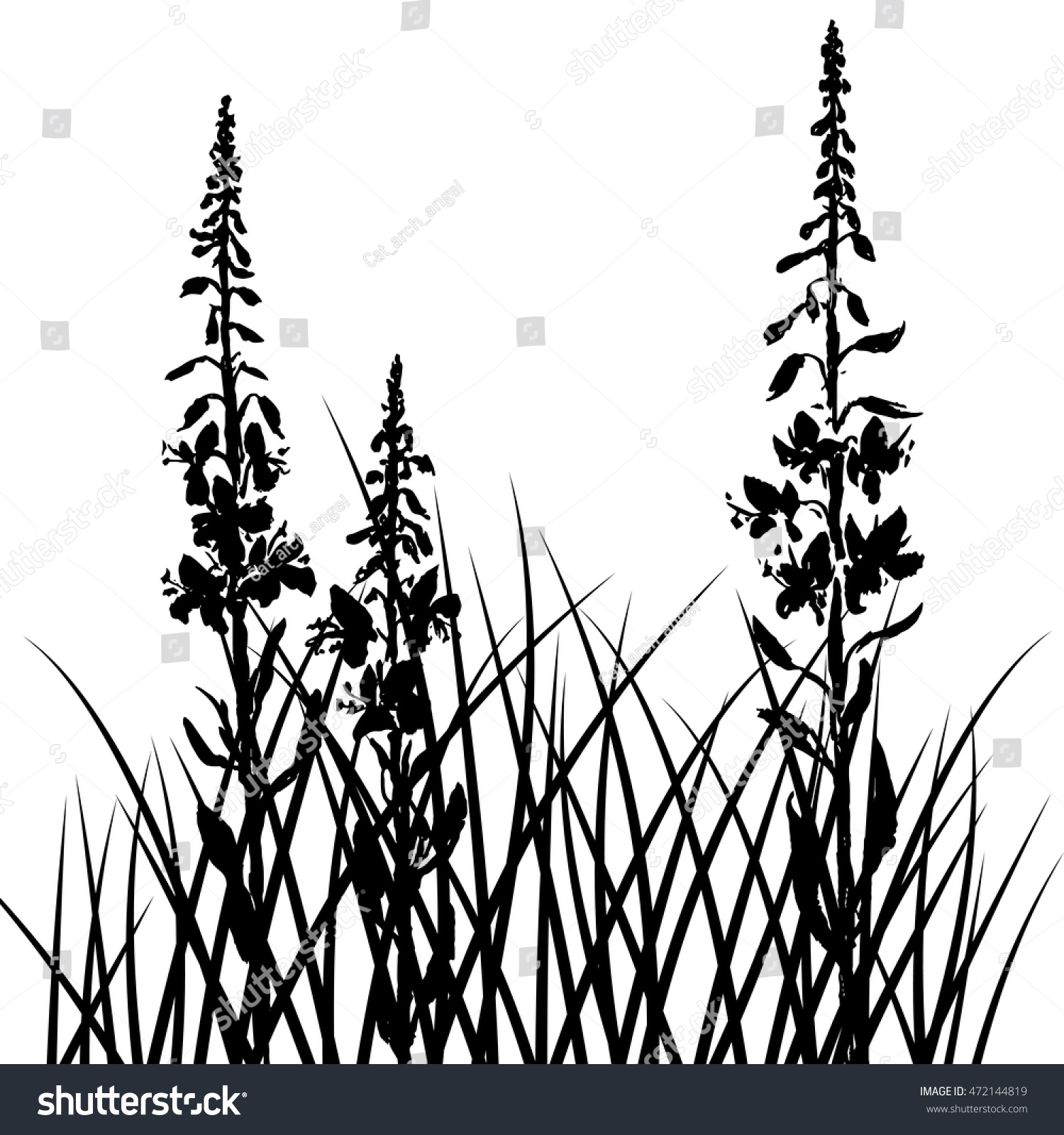 Vector Silhouettes Willow Herbs Flowers Grass Stock Photo (Photo ...