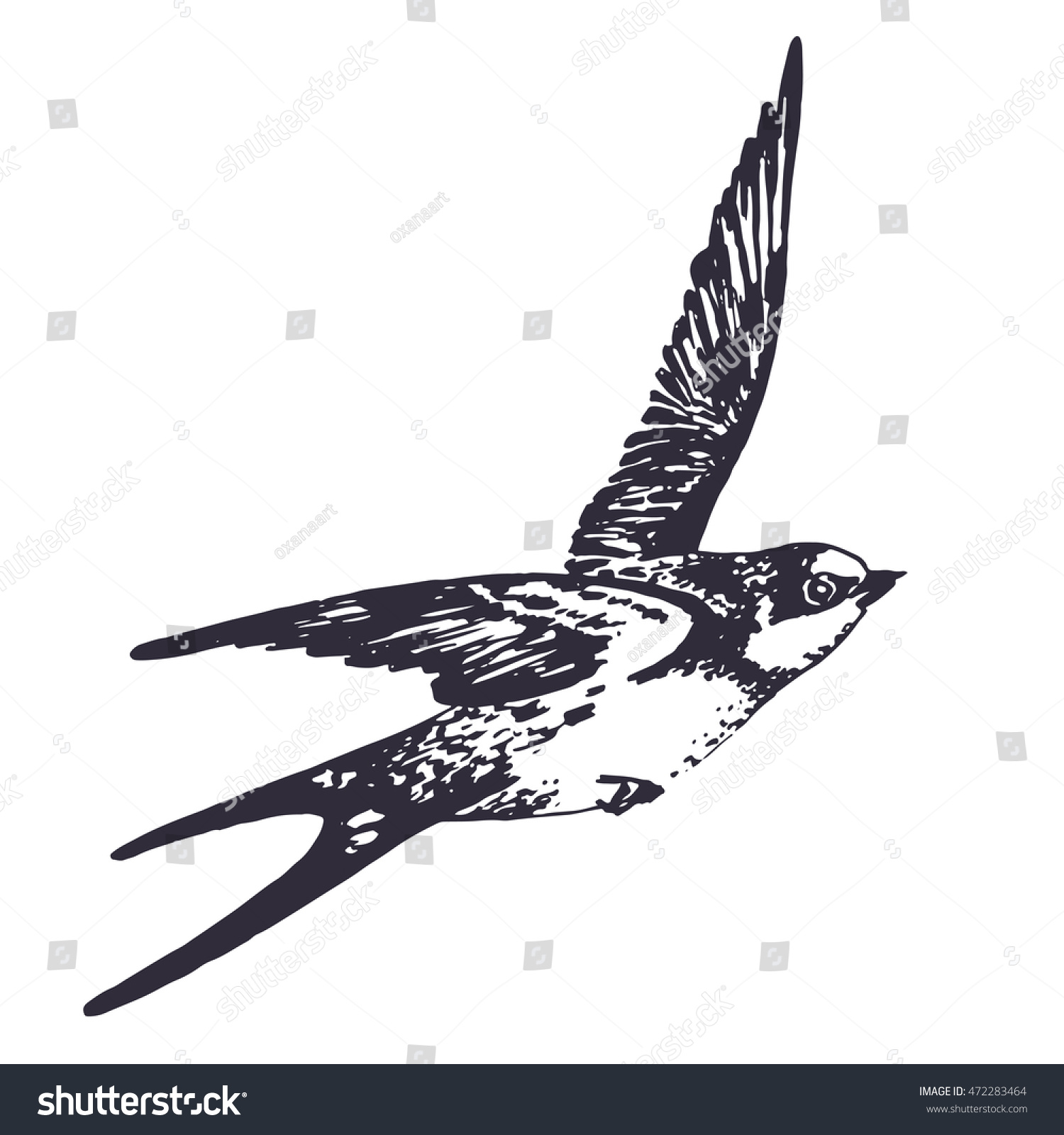 Vector hand drawn swallow bird illustration Flying swift detailed sketch beautiful animal in the wild