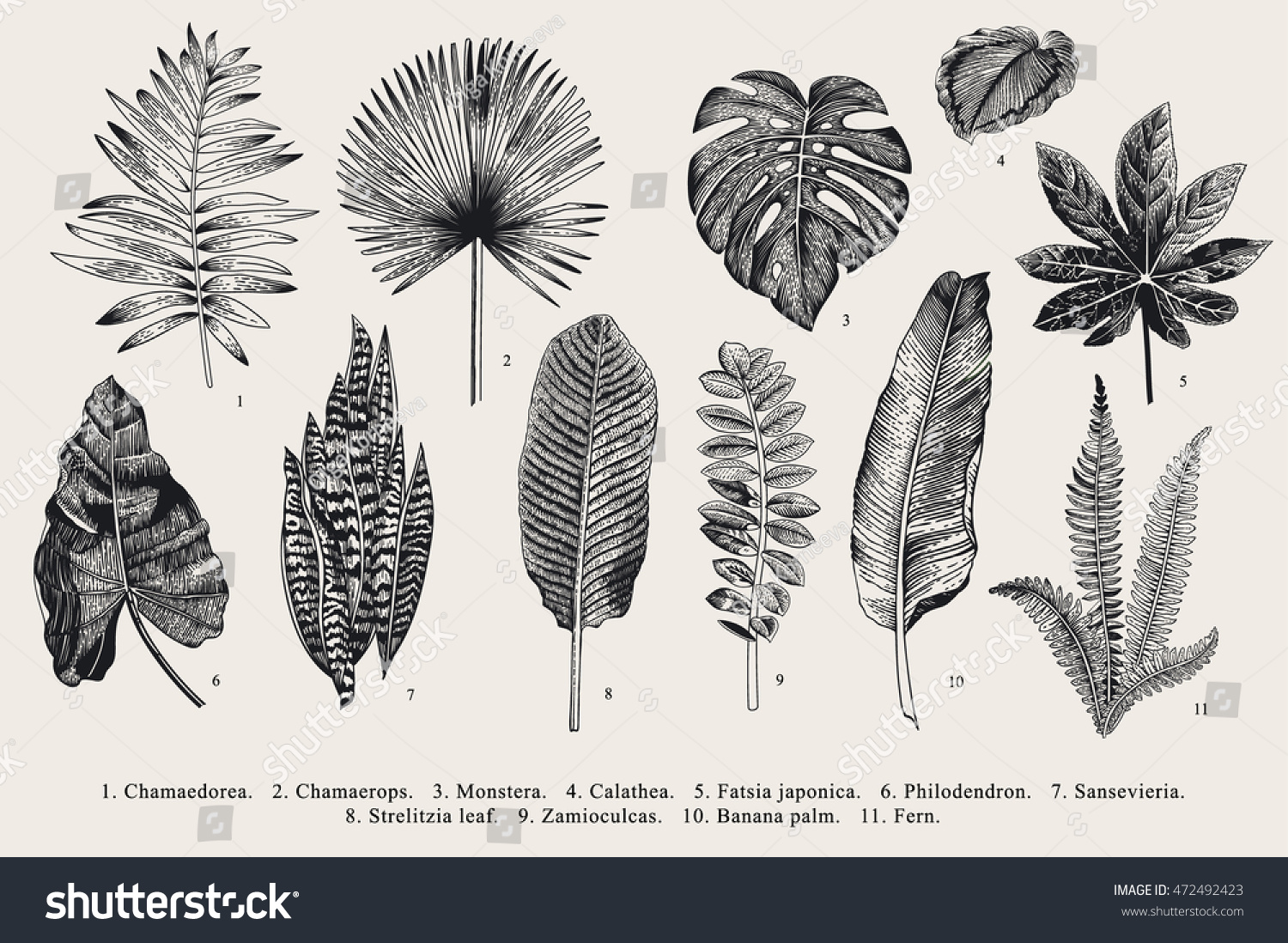 Set Leaf Exotics Vintage Vector Botanical Stock Vector ...