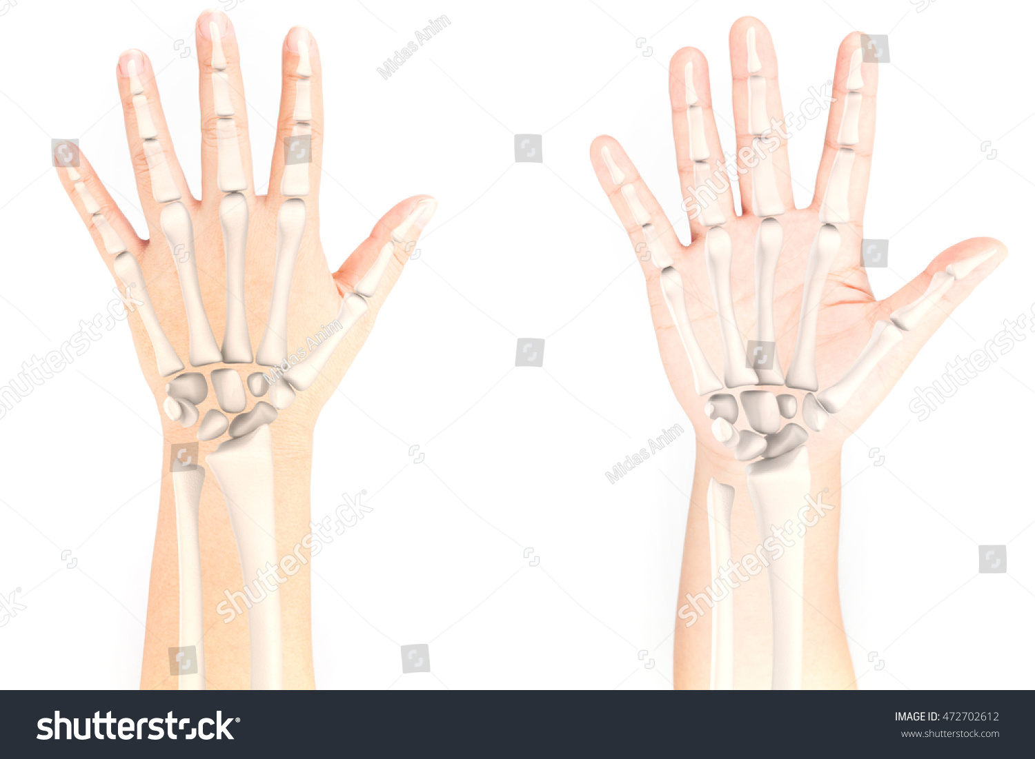 Wrist Bone Stock Photo Edit Now 472702612 Shutterstock
