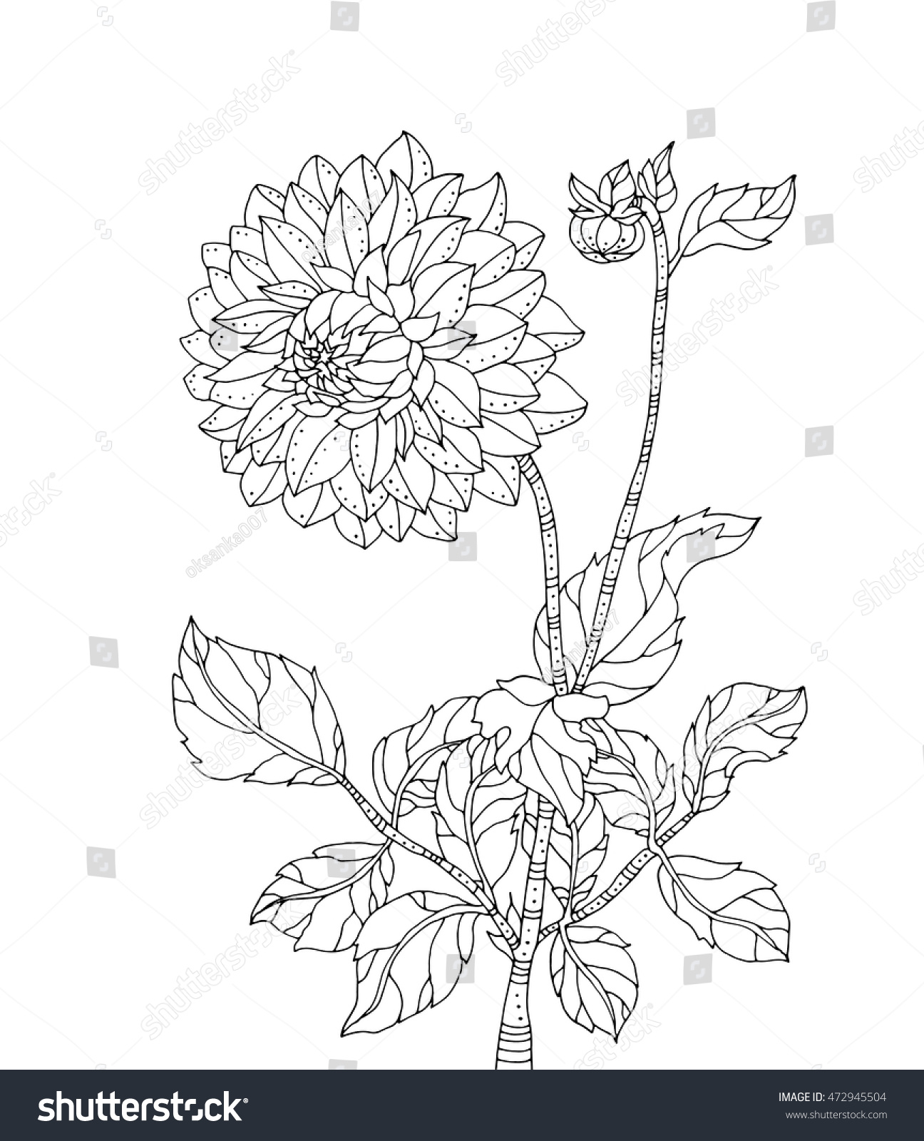 Chrysanthemum Flower Vector Artwork Coloring Book Stock Vector ...