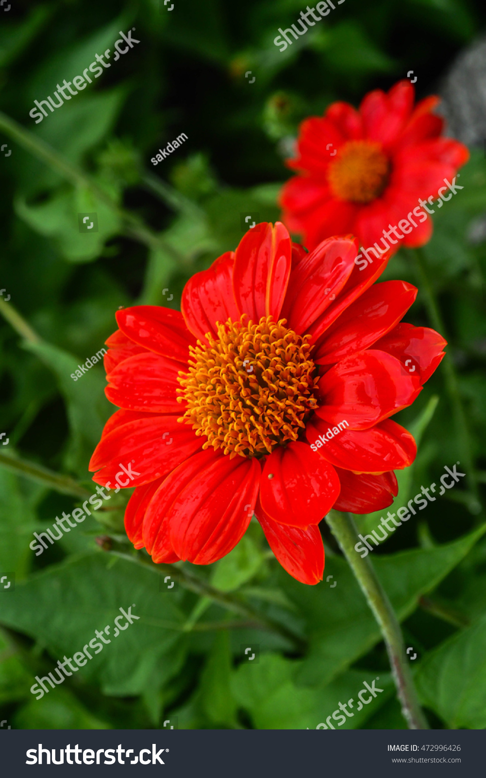 Beautiful Single Flowers Closeup Nature Backgroundflower Stock Photo