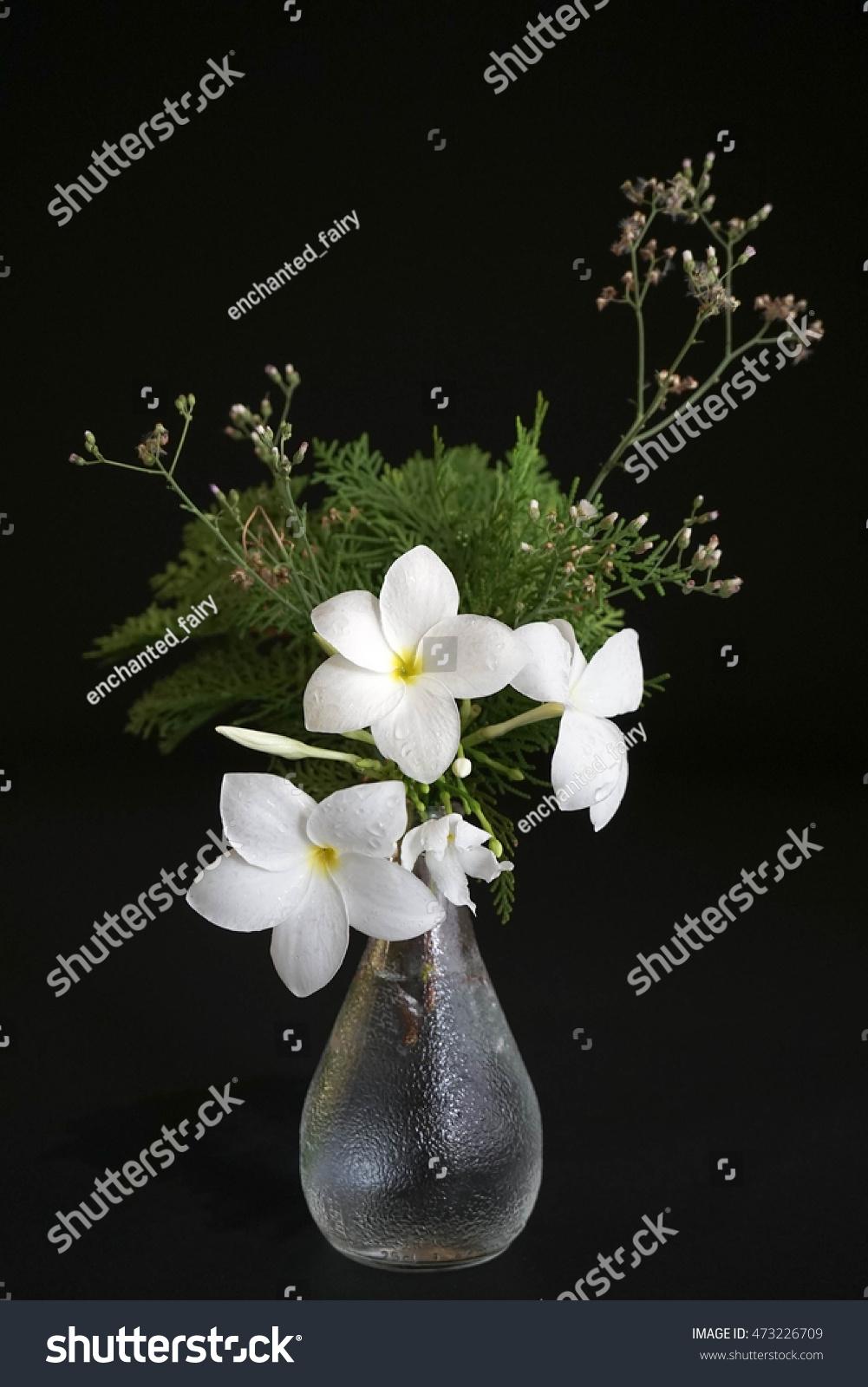 Fresh White Flowers Vase Isolated On Stock Photo Royalty Free