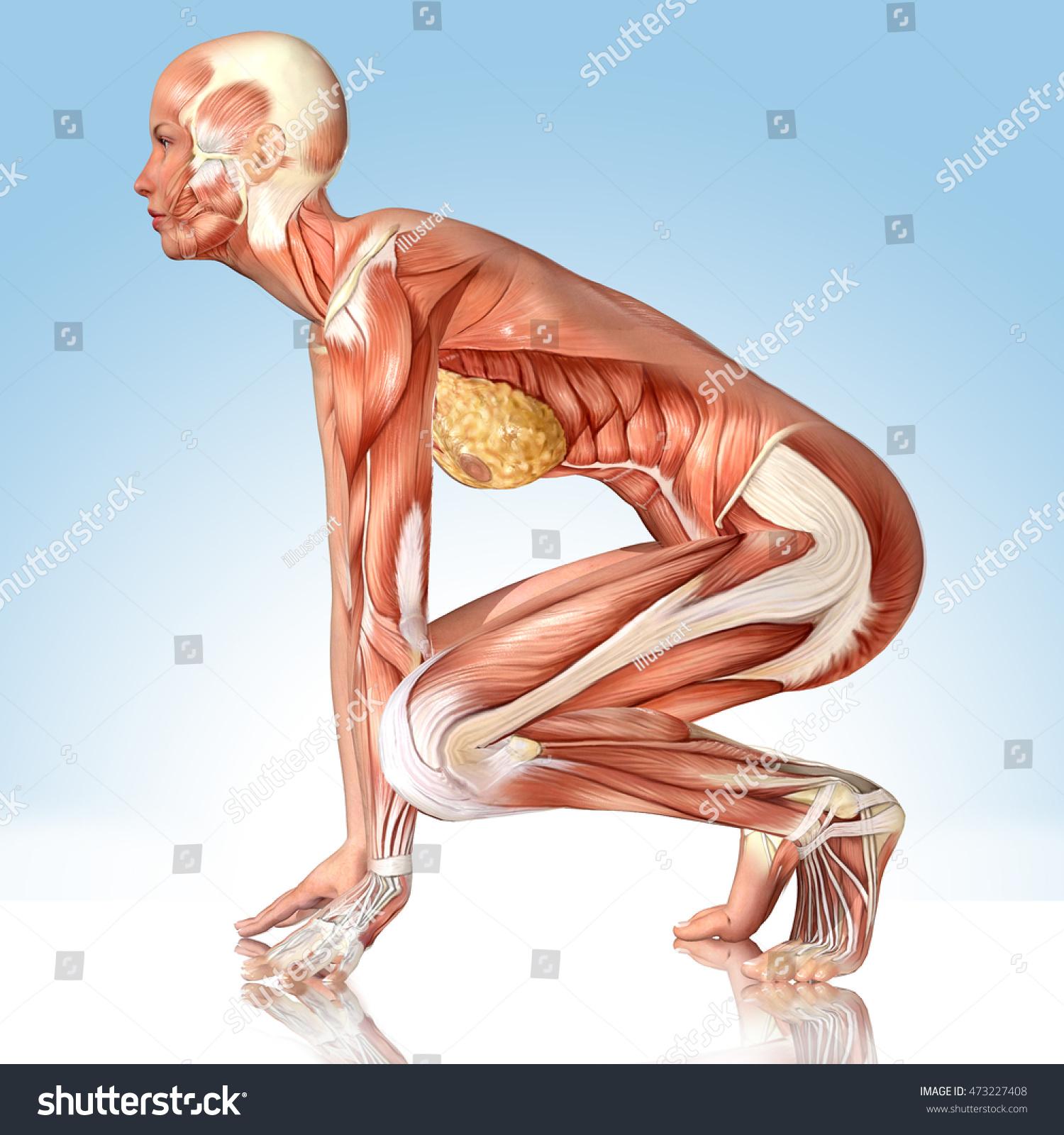 3 D Female Medical Figure Yoga Pose Stock Illustration 473227408 ...