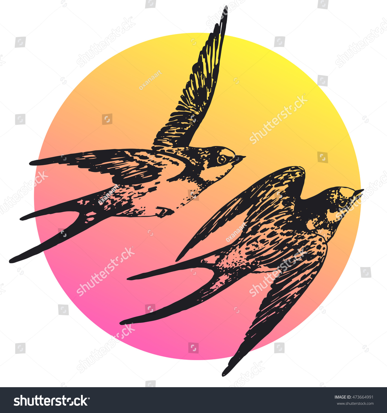 Set of sketches of flying swallows stock vector illustration - Vector Hand Drawn Swallow Bird Set Abstract Illustration Flying Pair Of Swifts In Love