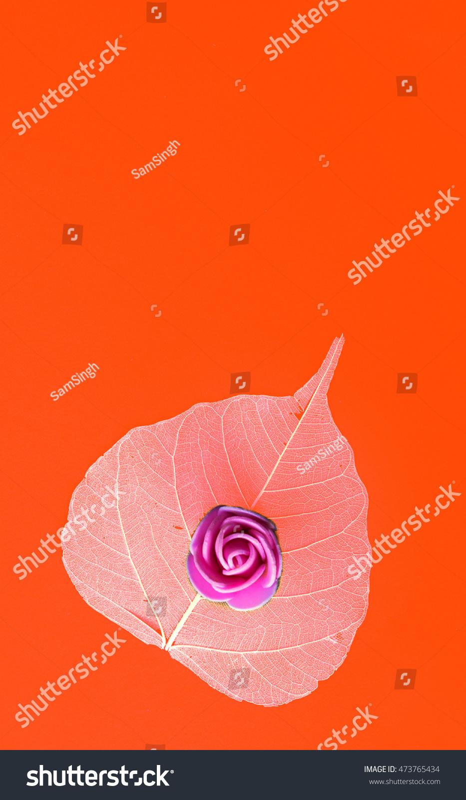 Bo Tree Bothi Tree Pipal Tree Stock Photo Edit Now 473765434