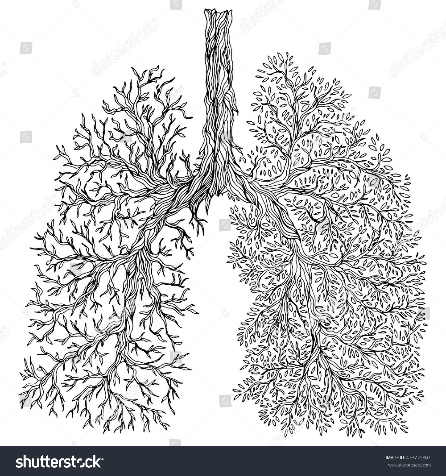 human lungs respiratory system healthy lungs stock vector