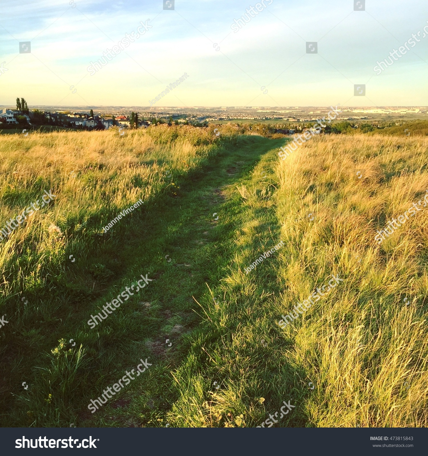 tall grass field sunset. Wide Green Grass Path Through Bright Prairie Field At Sunset With Trees,colorful Clouds Tall