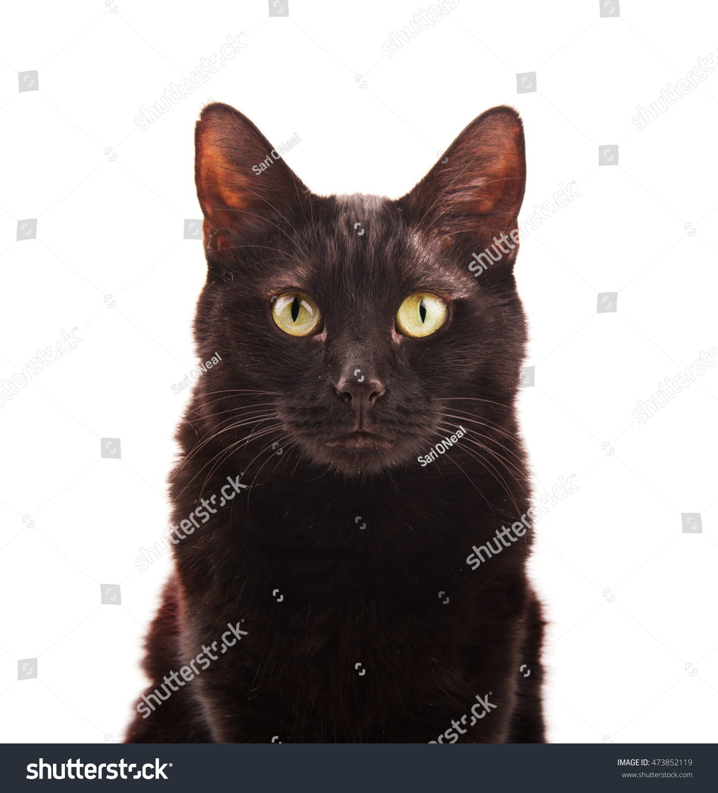 stock-photo-black-cat-looking-up-on-whit