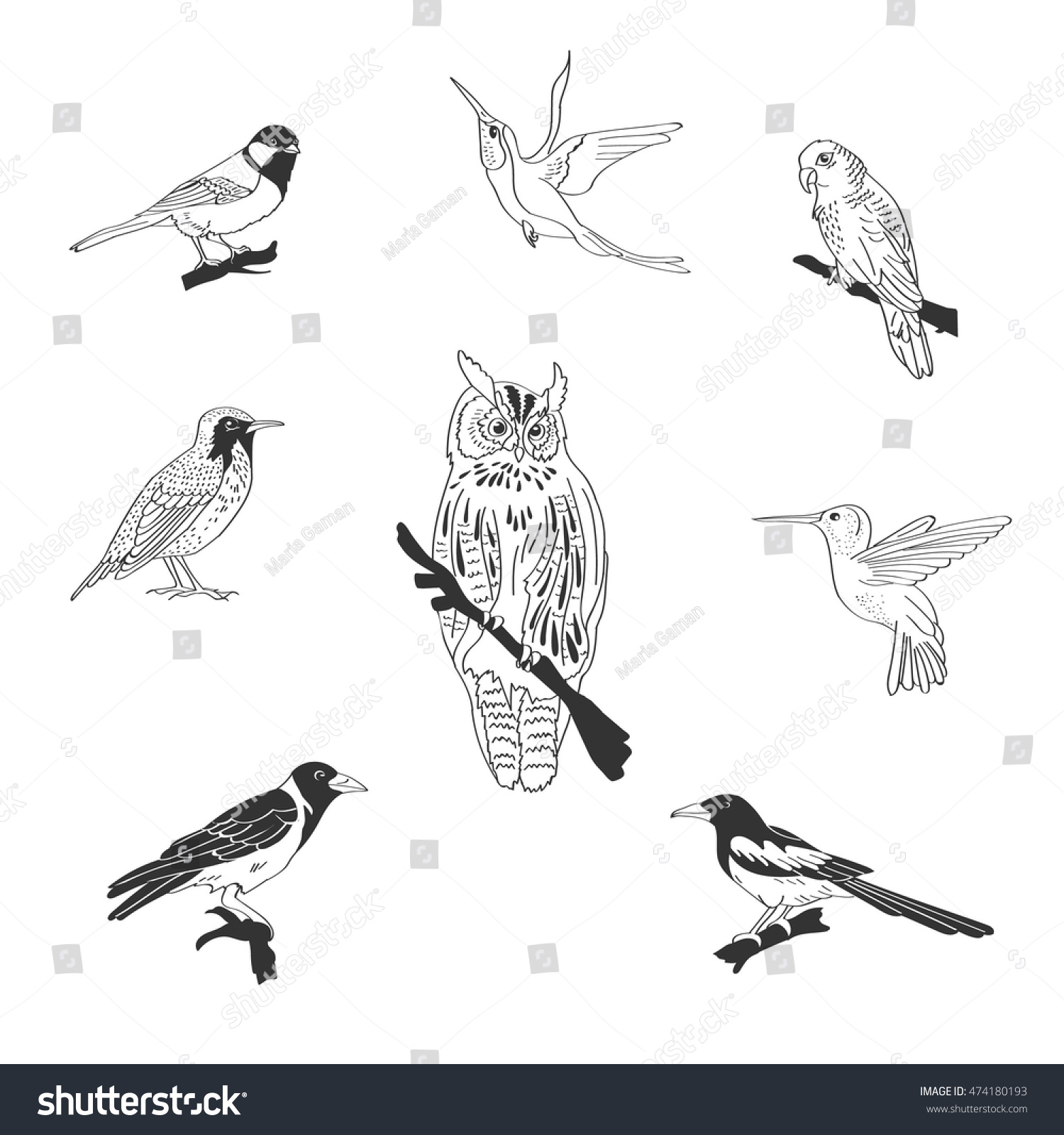Set of sketches of flying swallows stock vector illustration -  Vectors Illustrations Footage Music Set Of Wood Domestic And Exotic Birds Flying Animals Black White Contours Sketch