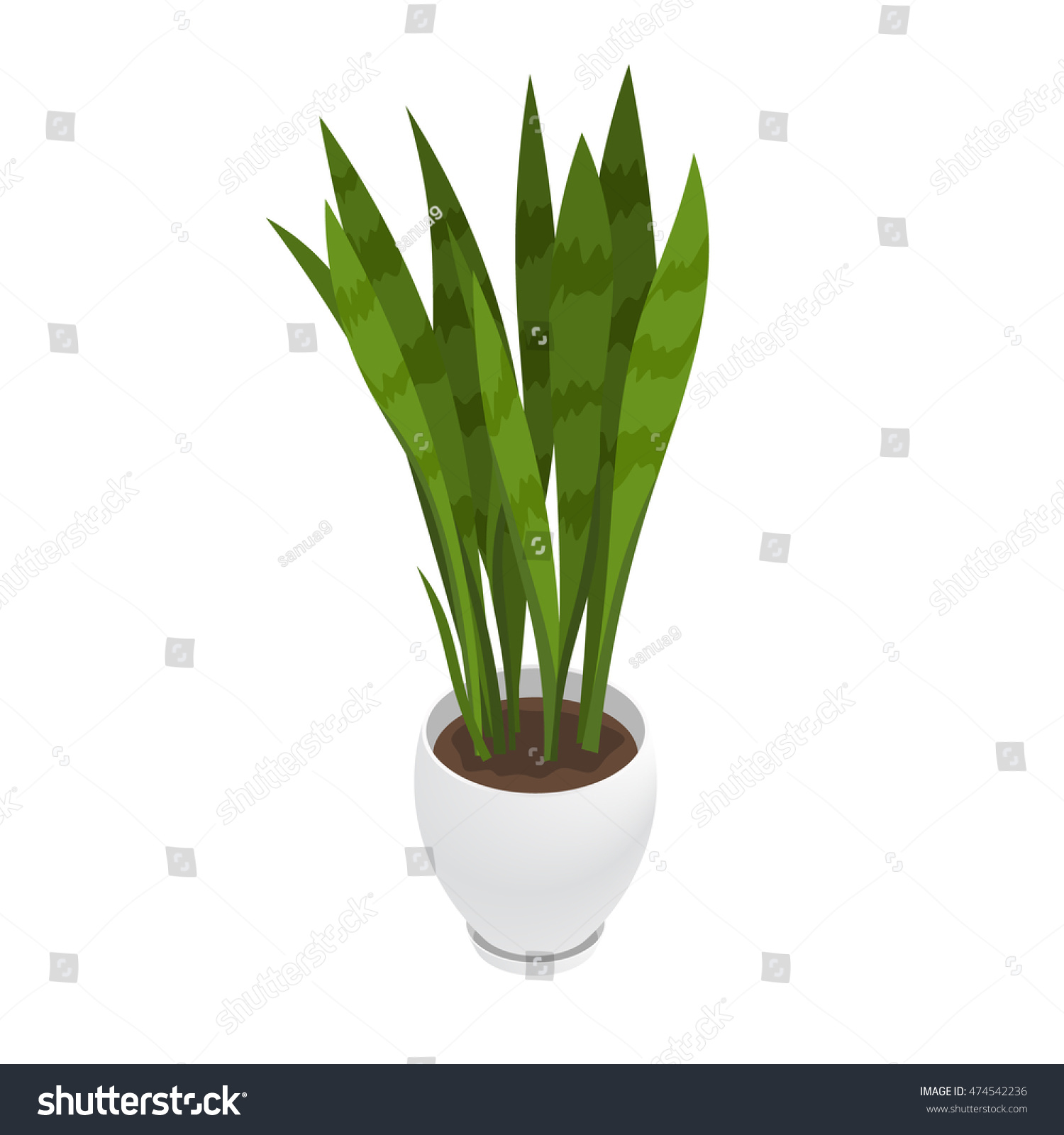 office flower pots. Isometric Sanseveria And Flowerpot. Indoor, Office House Plant. Interior Decoration Element. Flower Pots
