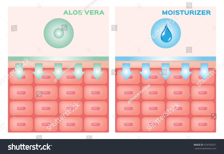 Aloe Vera Moisturizer Apply On Skin Stock Vector 474769321 ...