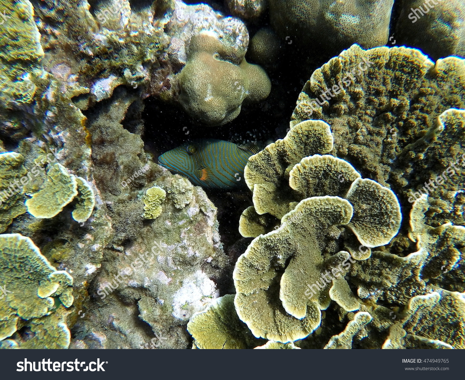 nature coral underwater landscape - photo #16